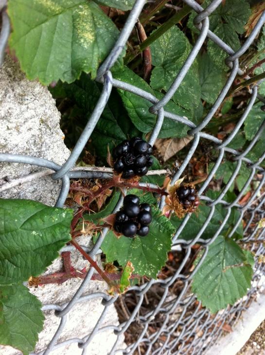 A berry peculiar practice